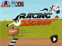 Curse cu Zebra Zou